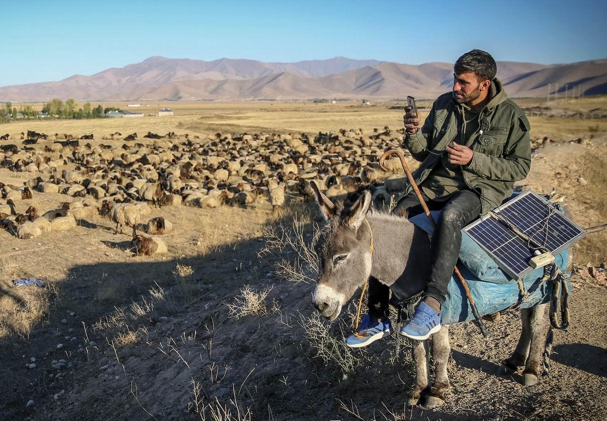 А у меня ослик с питанием от солнечных батарей: Современный турецкий пастух