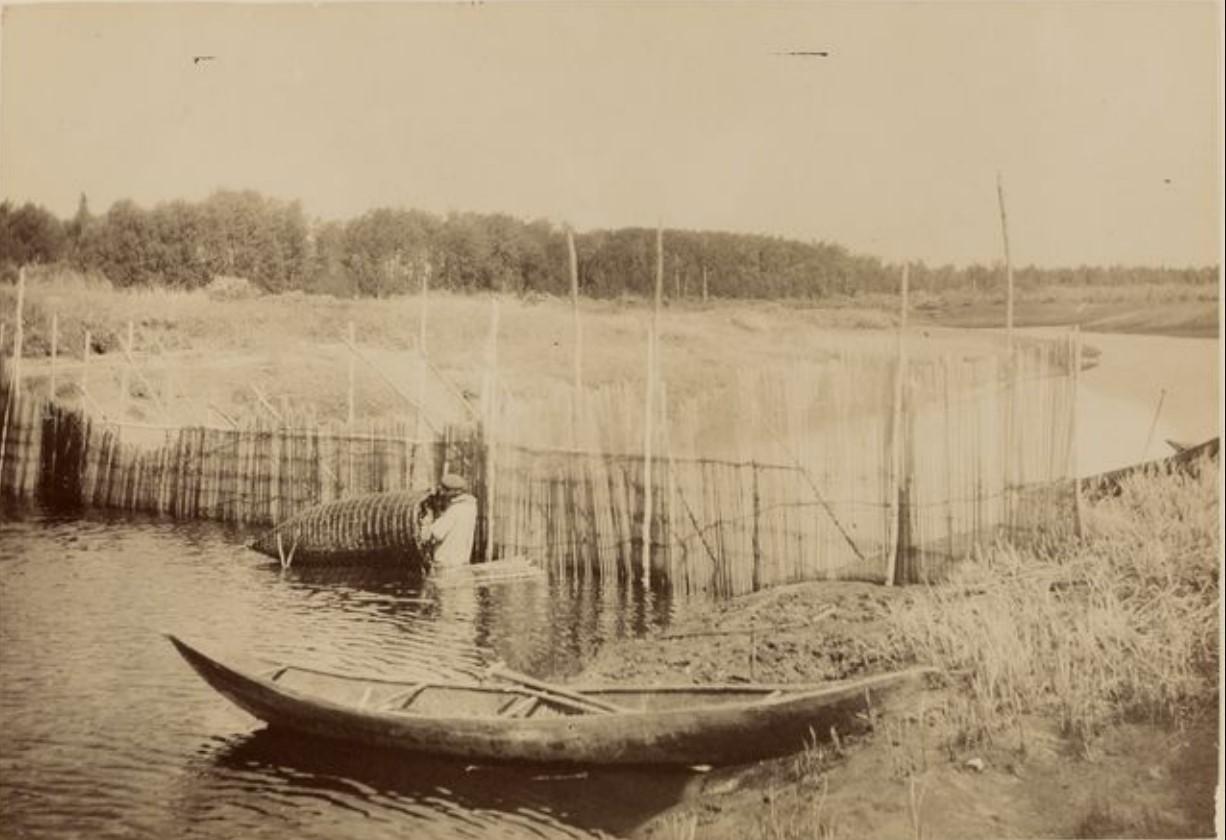 Рыбак за работой. Калганак, Васюган