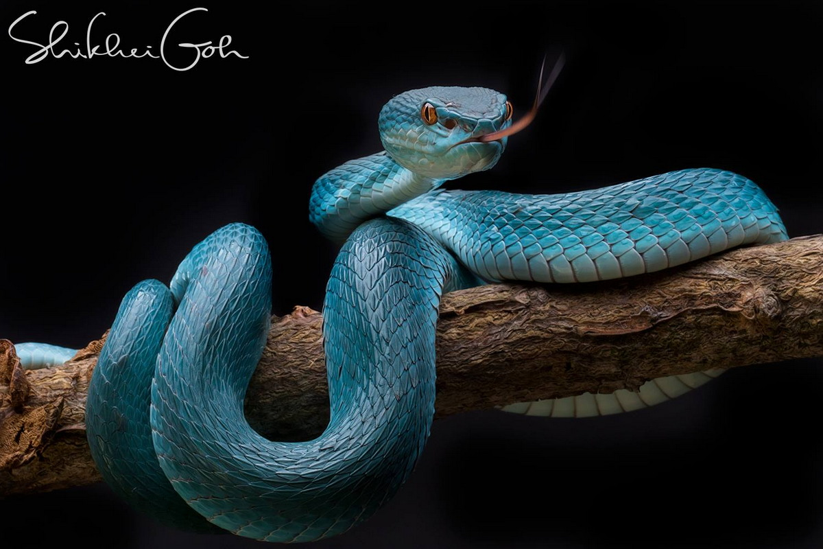 Замечательные макрофотографии Shikhei Goh