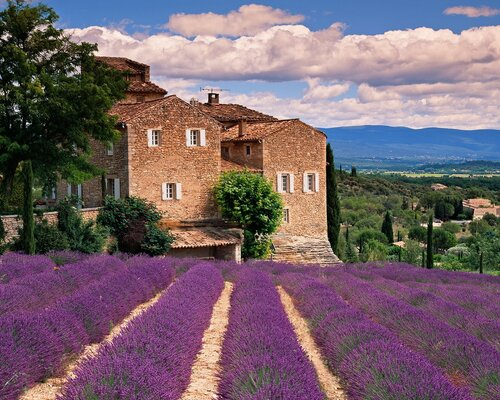 lavender-fields-in-tuscany-8232013-151850_original.jpeg