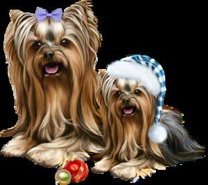 собаки, год собаки, 2018