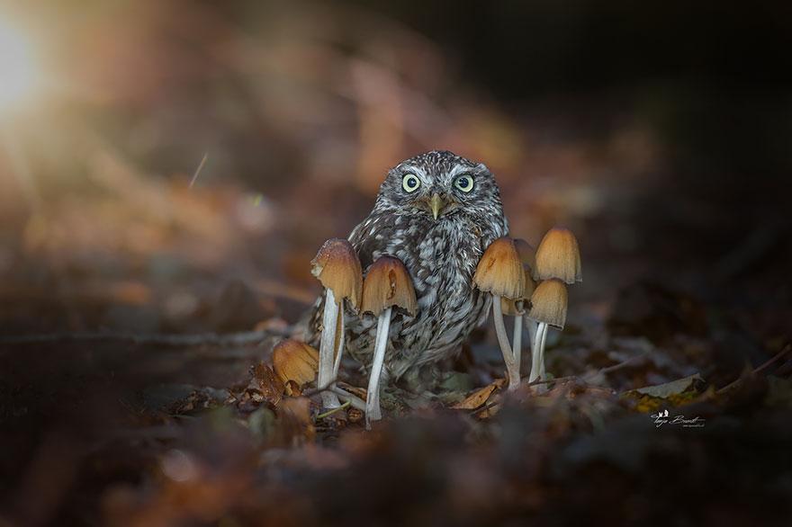 Фотографии этой милой маленькой совы буквально покорили интернет