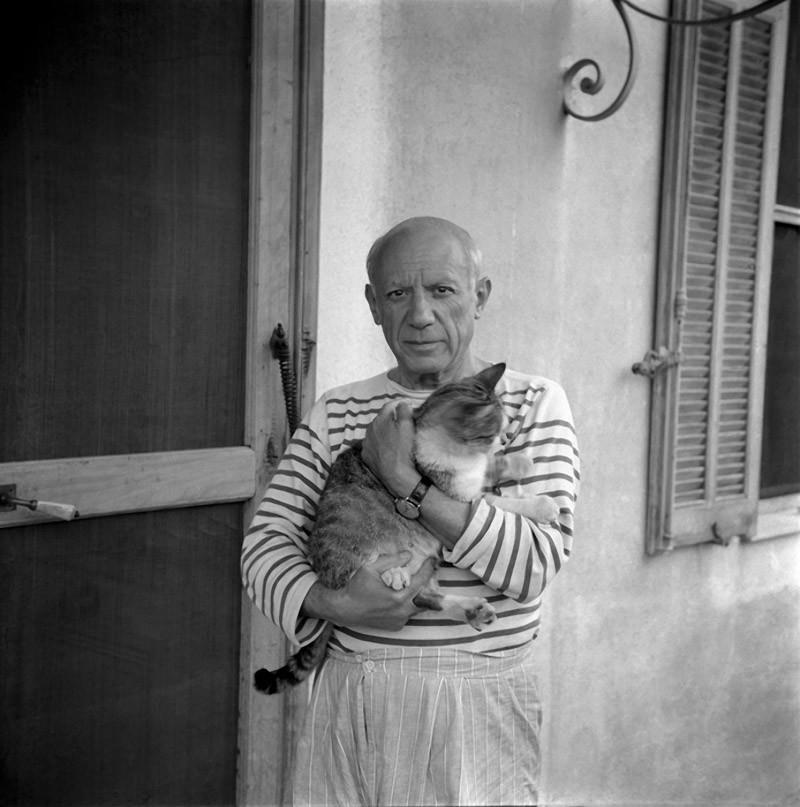 5. Он же с другим котом.