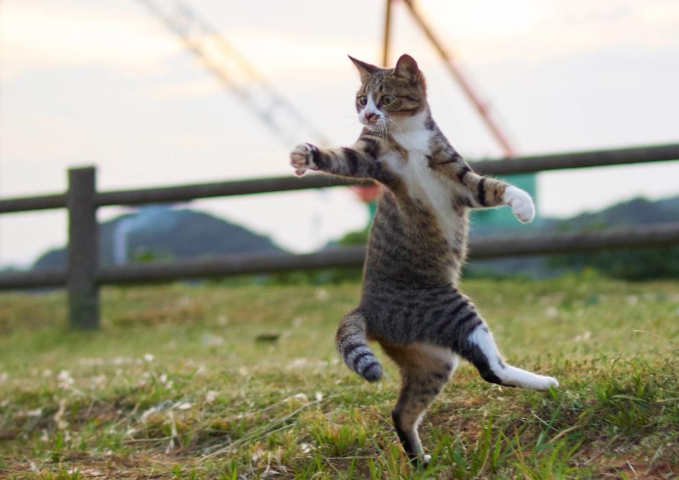 Кунг-фу кошки