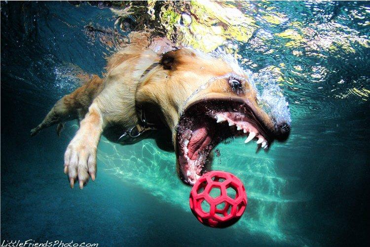 Маленькие собаки под ведут себя более сдержано под водой: