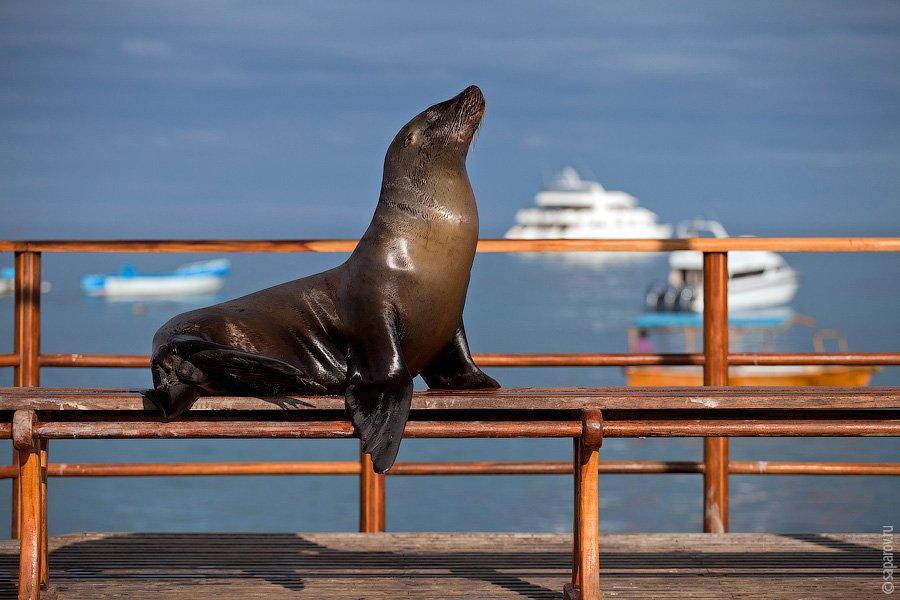 Они сотнями лежат на пляже, на деревянной набережной, на скамейках и столах в порту, около ресторано