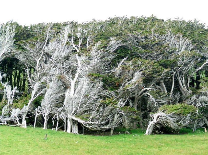 Красота деревья в Новой Зеландии