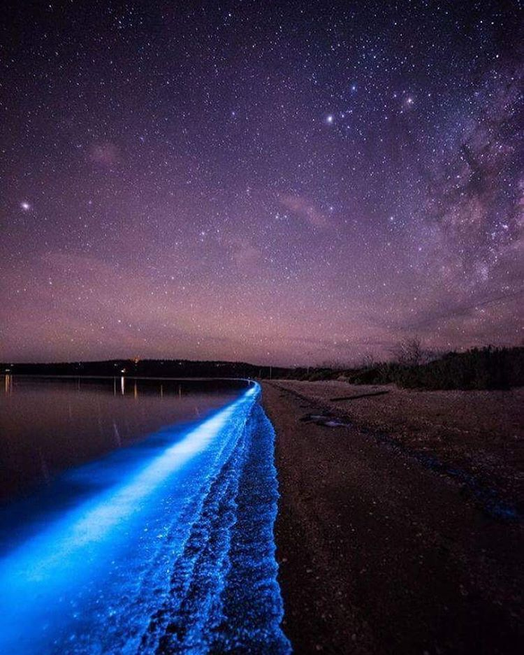 Волшебница-природа: мистическое свечение у берегов Тасмании очаровывает туристов