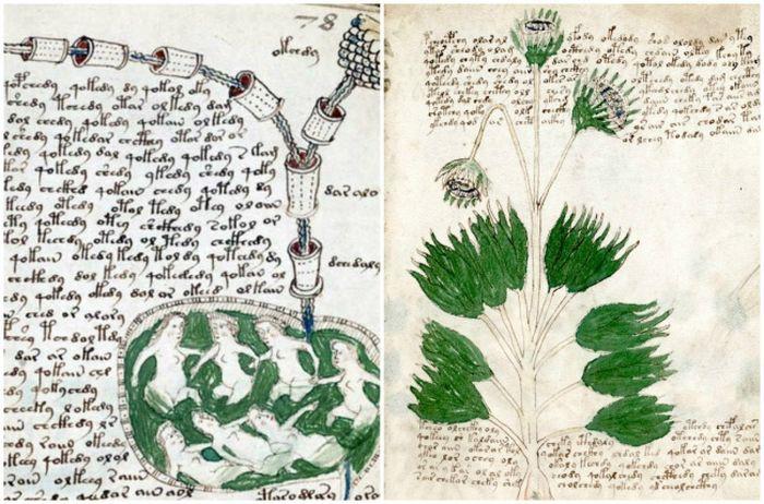 Нестандартность манускрипта заключается в том, что он написан с использованием уникального алфавита,