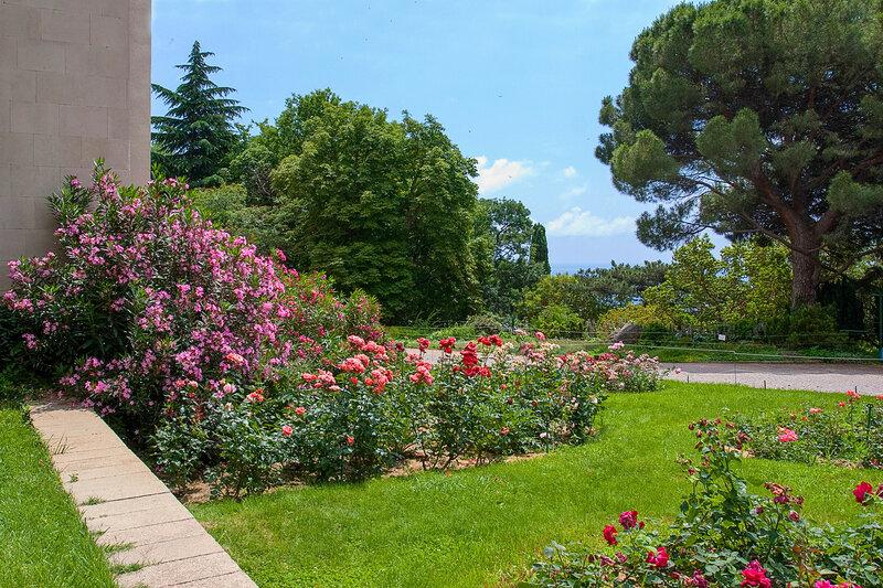 Олеандр и розы.  Никитский ботанический сад