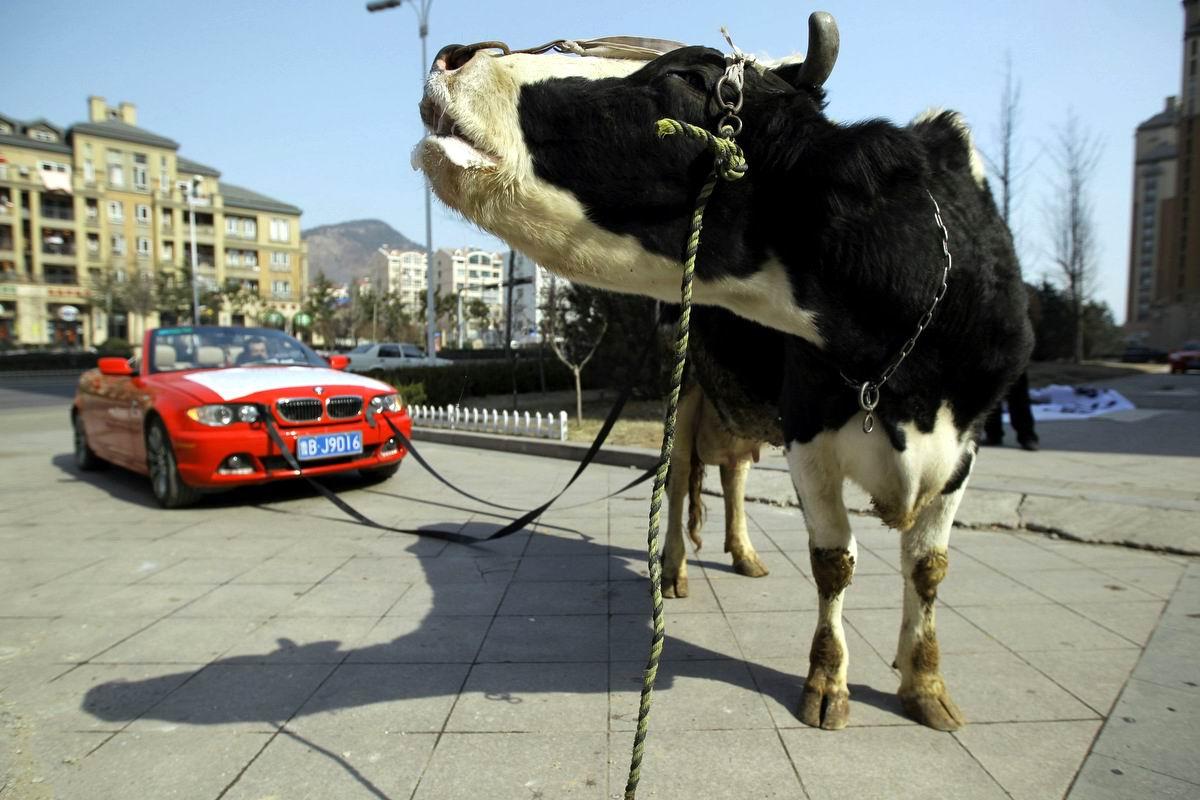 Почему-то все пошло не так: БМВ с движком мощностью одна коровья сила