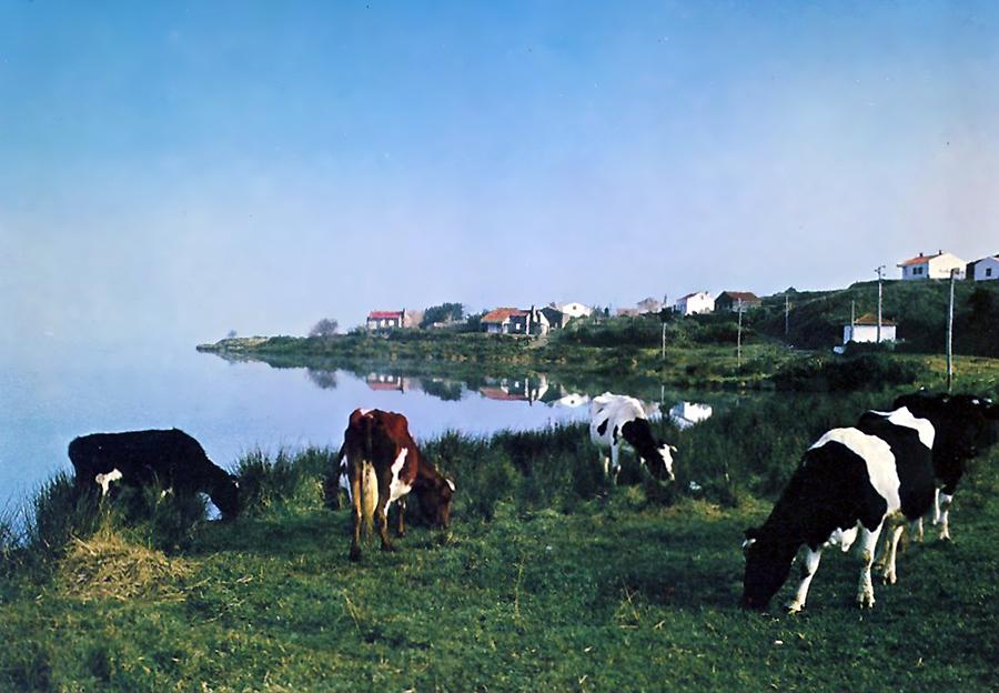 Ilha de São Miguel - Sete Cidades - As Lagoas ao Amanhecer.jpg