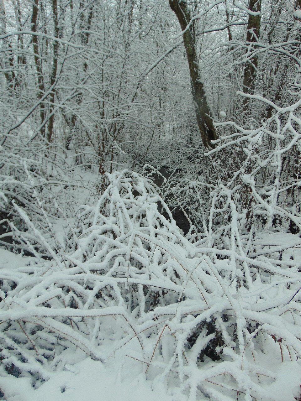 Спрятался в снегу.
