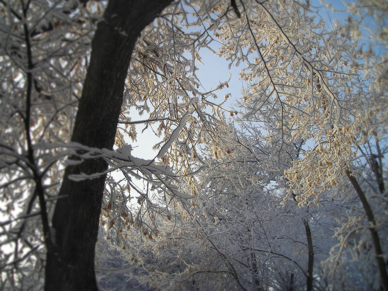 снег1 (1).jpg