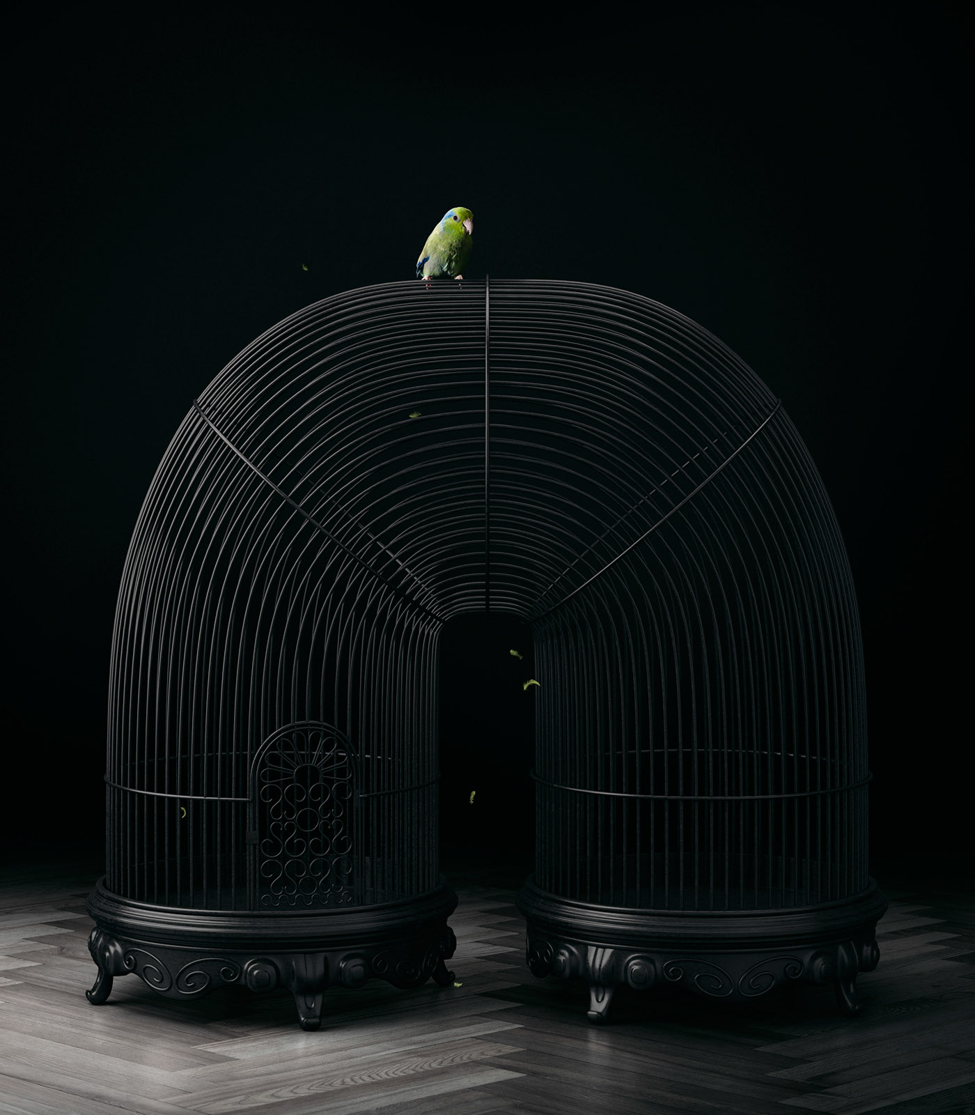 FREE BIRD / фото Mike Campau