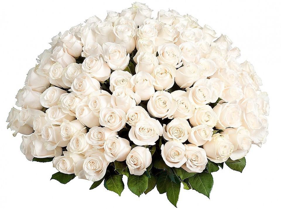 Все круто, поздравительная открытка с днем рождения белые розы