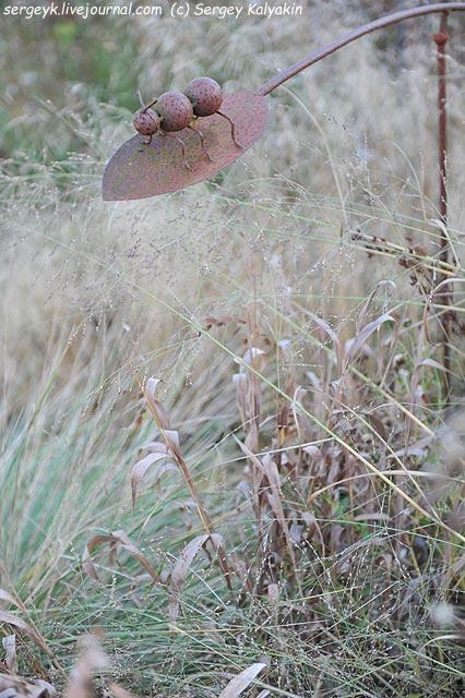 Chasmantium latifolium Panicum virgatum (2).JPG