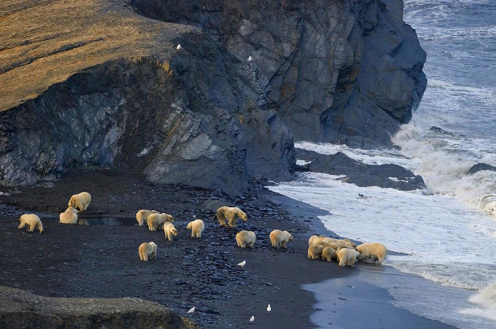 10. Медведь во дворе. (Фото Sergey Gorshkov | bioGraphic):