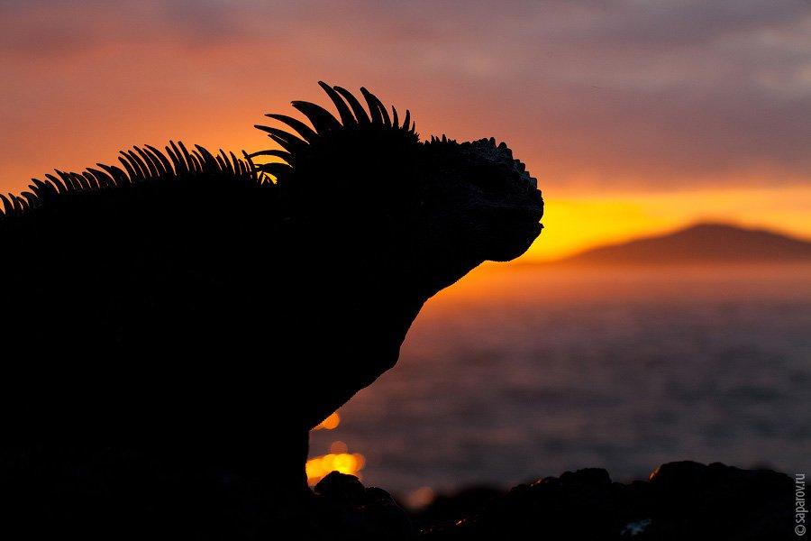 Закаты на острове Изабела безумно красивые — из-за вулкана Sierra Negra, склоны которого каждый вече