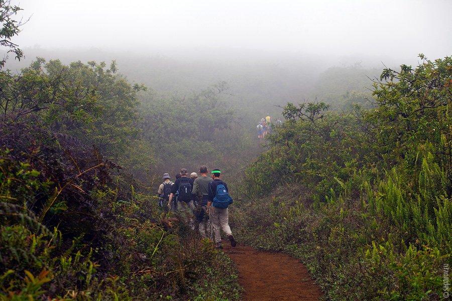 Гид неожиданно остановился и сказал, что мы находимся на самой высокой точке вулкана. Вскоре дождь п