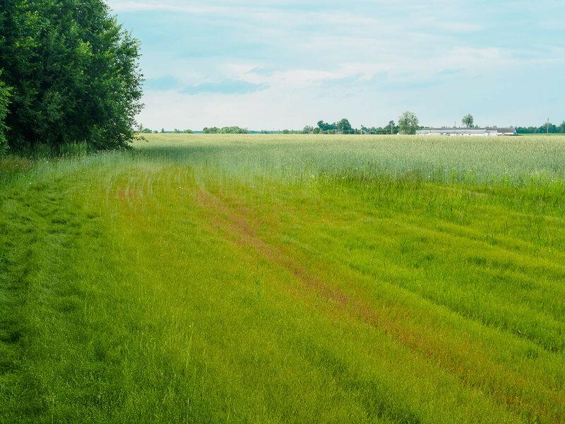 Пора и мне искать удобную полянку.