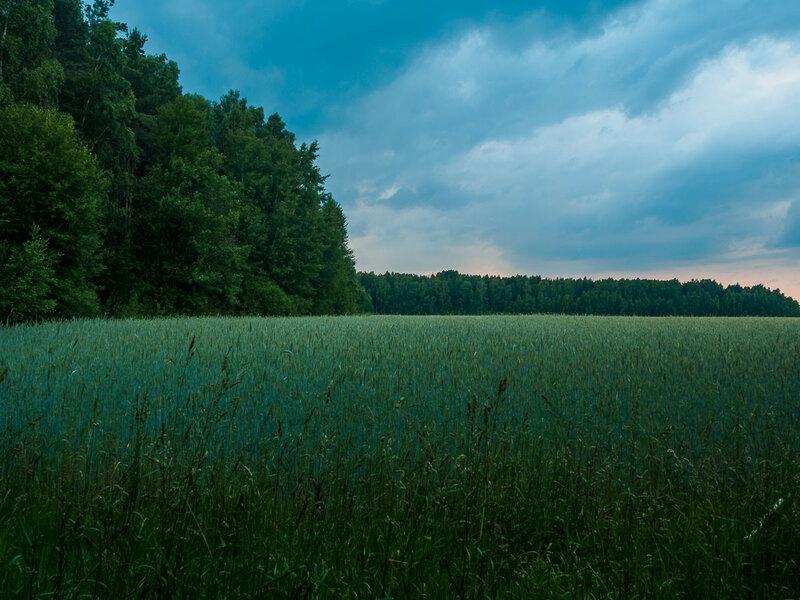Вечернее поле. Скоро начнётся дождь.