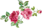 Beautiful Roses #7 (21).png