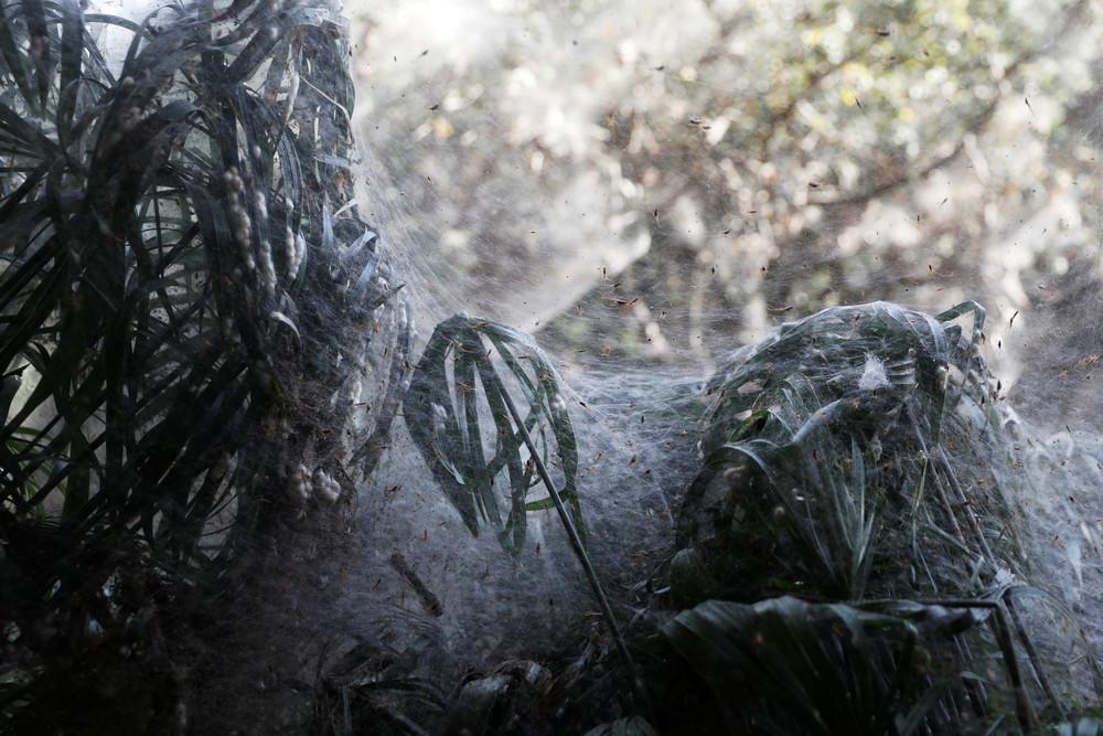 Огромная паутина возле израильской реки