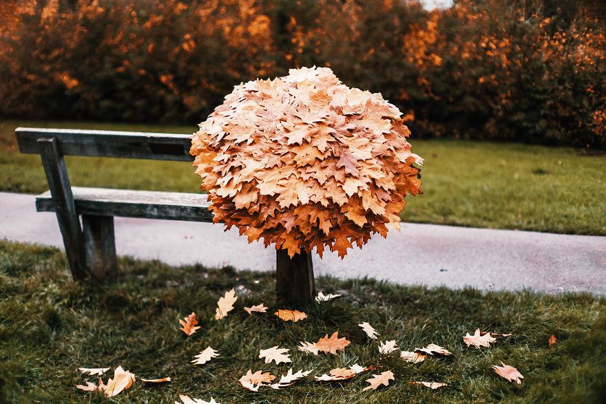 autumn0061-59e7b3d06930d__880.jpg