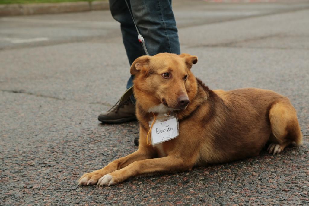 Брайн собака из приюта догпорта