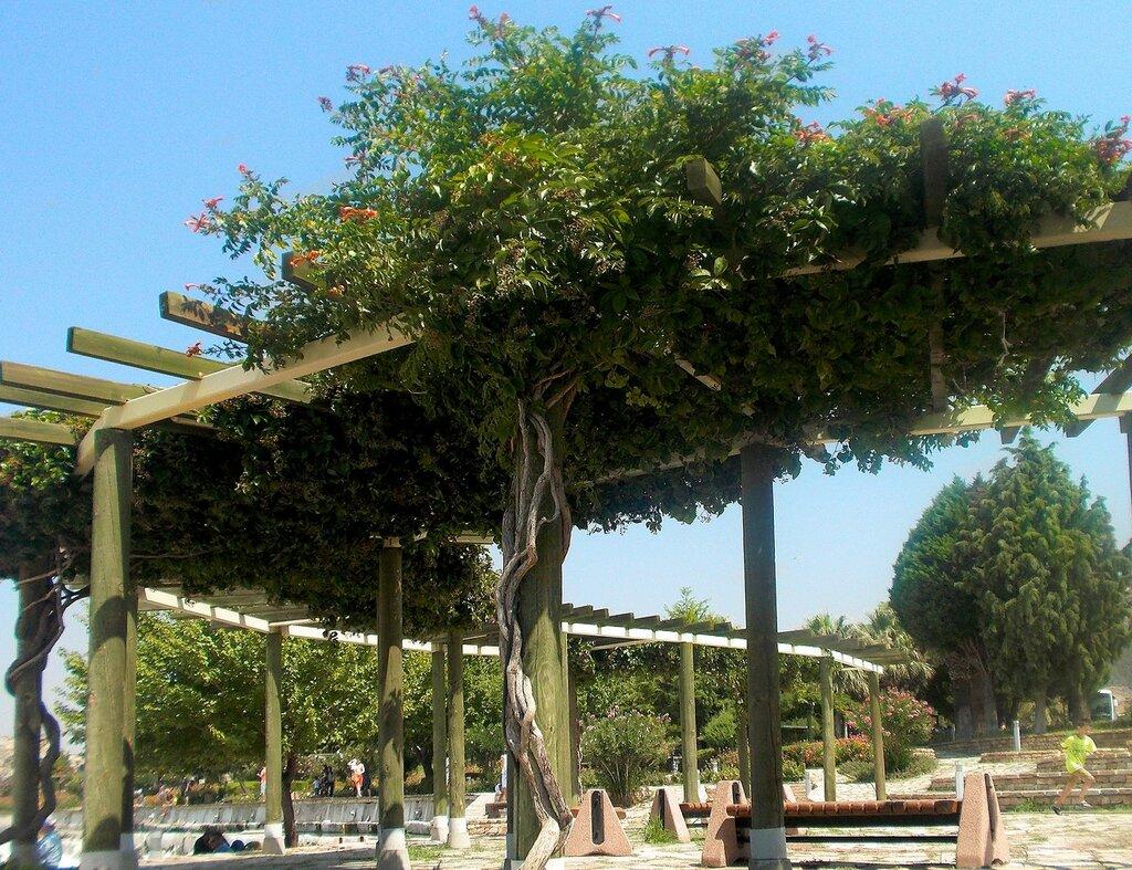 Пергола на верхней площадке террас