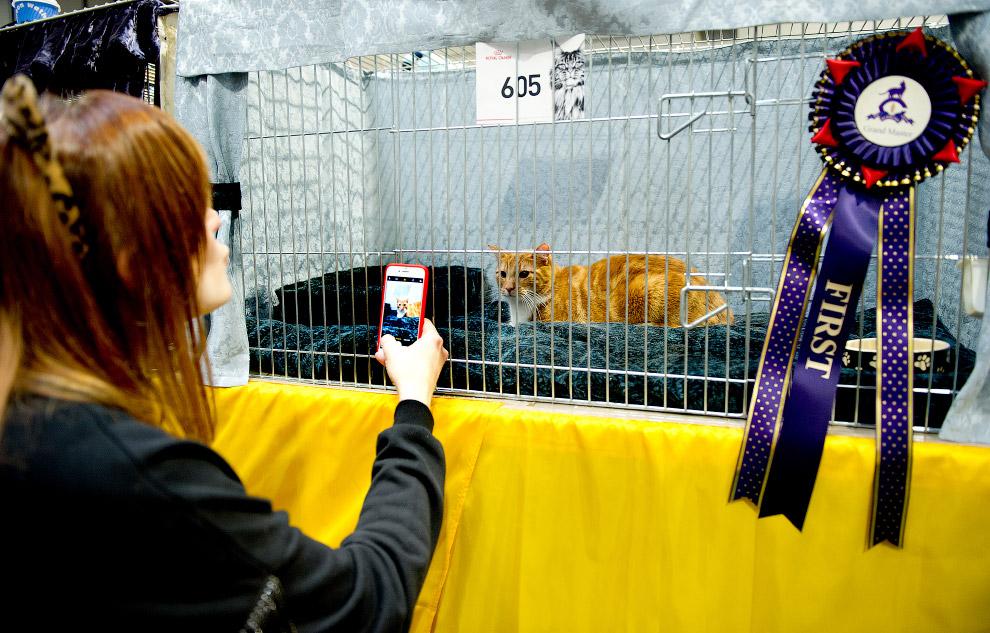 3. У этого кота за плечами уже не одна победа. (Фото Shirlaine Forrest   WireImage):