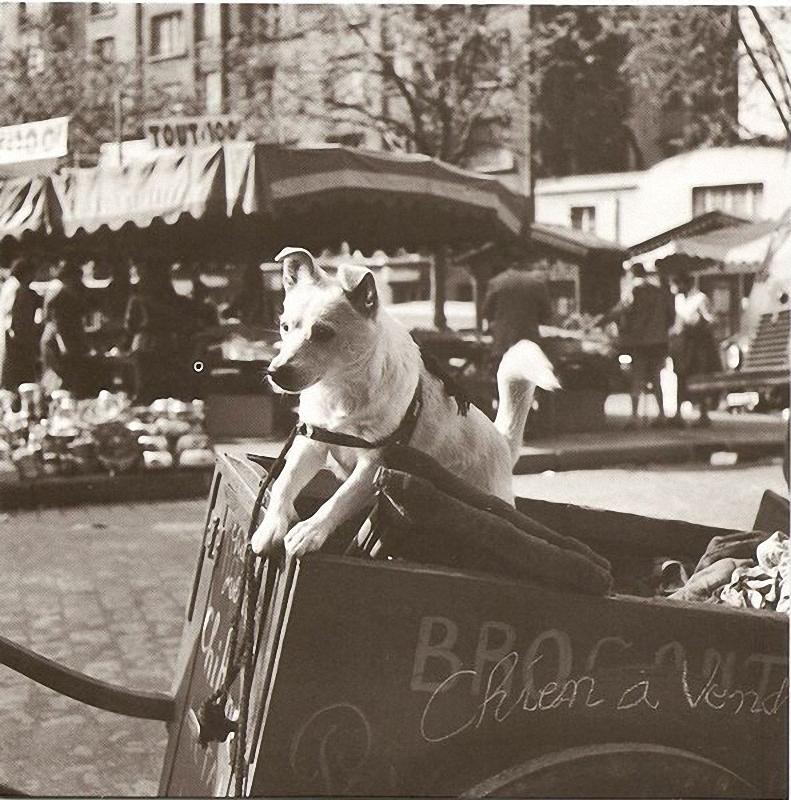 28. Продажа щенков на блошином рынке. Все продается и все покупается на блошином рынке — как блохи,