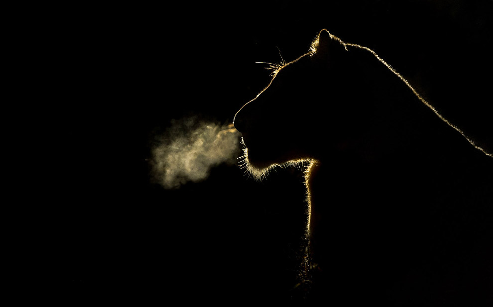 Полночное сафари (10 фото)