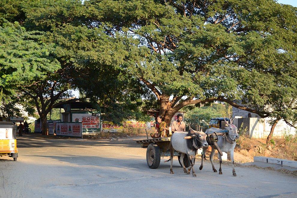 Индия, около Агры. В Индии, несмотря на миллиард с хреном населения, нет ощущения столпотворения люд