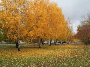 Осень в желтом)
