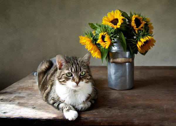 1-cat-and-sunflowers-nailia-schwarz.jpg