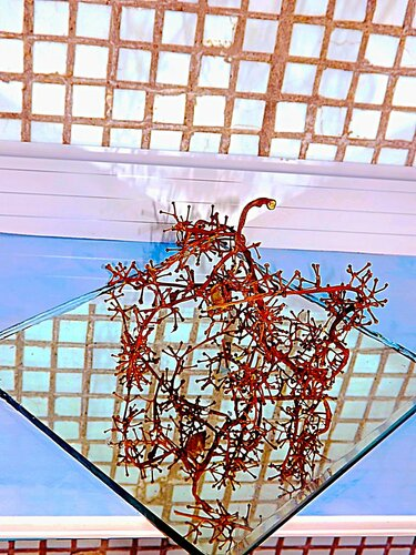 Сухая ветка винограда на зеркале