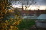 Summilux-M 1:1.4/50 ASPH. + Leica M9