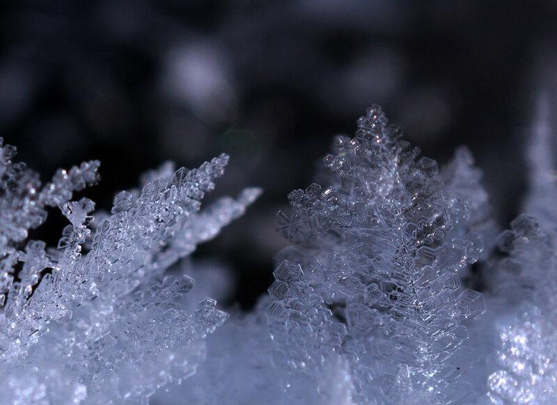 Сказки художницы-зимы