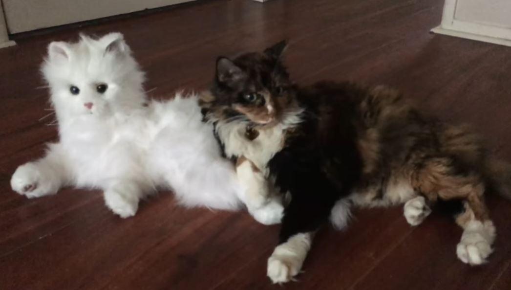Робокот и живые коты