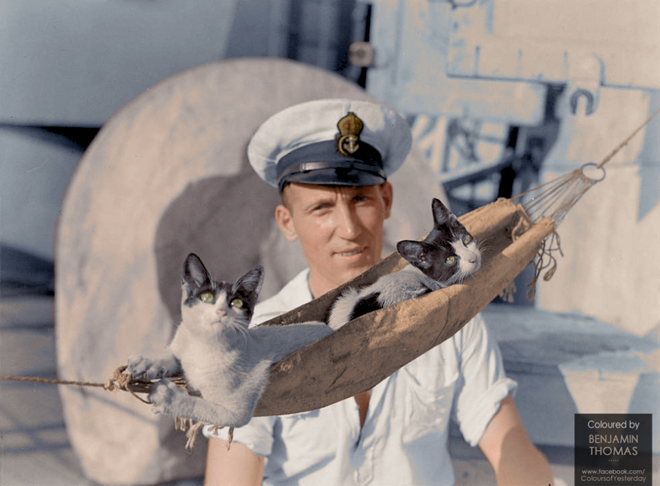 Aboard the HMAS Nizam, the ship's cats have a custom made cat hammock to themselves (1941)