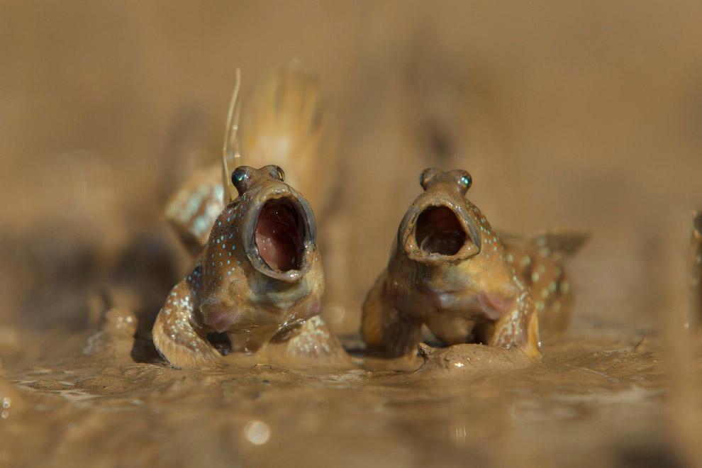 20. Идите вы на… (Фото Linda Oliver | Comedy Wildlife Photography Awards):