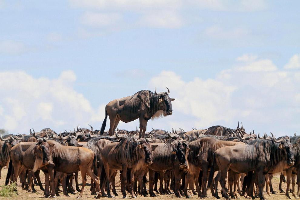 28. Техобслуживание самолетов. (Фото Graeme Guy | Comedy Wildlife Photography Awards):