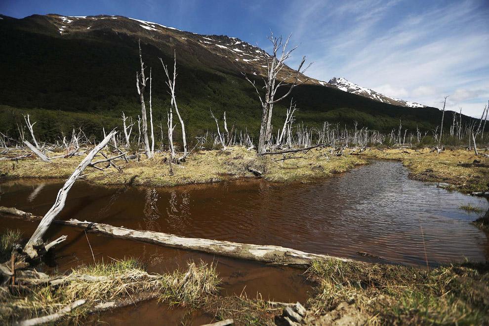 6. Ледник Мартиал является основным источником питьевой воды города. А так же он является популярны