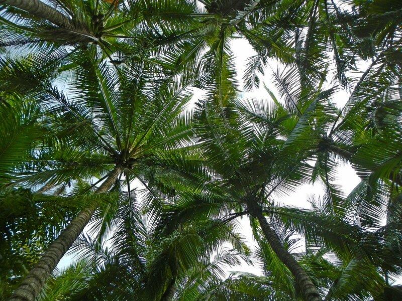 Кроны пальм над головой - Термальные источники Наньтянь