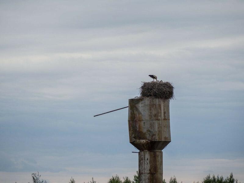 Аисты занимаются своими делами наверху водонапорной башни.