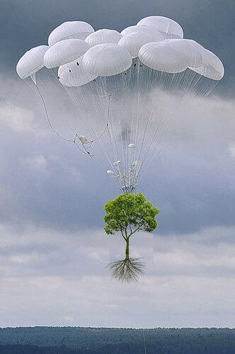 Дерево на парашюте