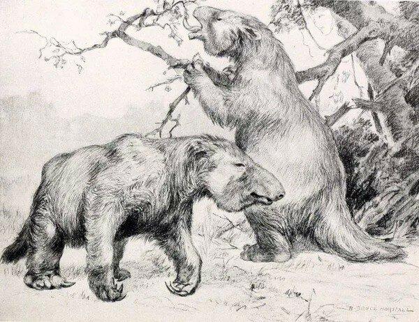Гигантские-ленивцы