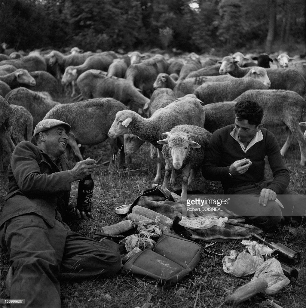 1958. Бивак во время сезонного перехода на летние пастбища